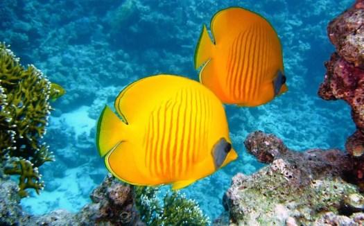 Le specie marine si estinguono al doppio della velocità rispetto alle terrestri ...