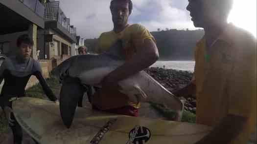 Il vero spirito di chi ama il mare ... salvato cucciolo di squalo bianco 🦈