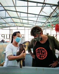 Lampedusa Turtle Rescue