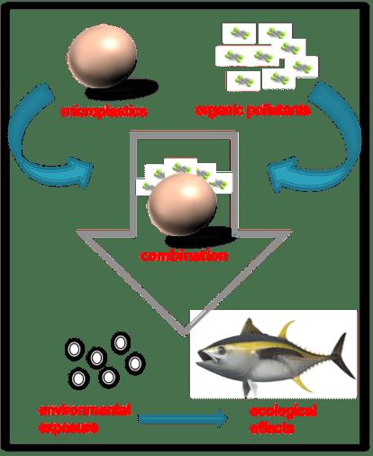 Microplastiche e contaminanti: un connubio spesso sottovalutato