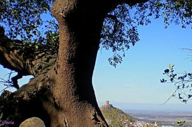 Desde el puerto la Zorra, vista del castillo tras un alcornoque