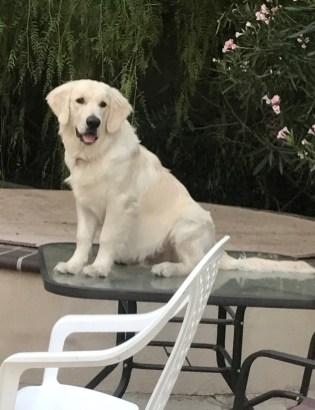 September 8, 2017 Neo on the outside table