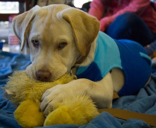 De-Stress Week Puppy