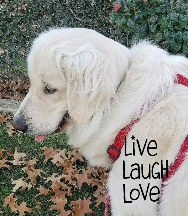 Feb 10 2018 Neo Live Laugh Love