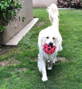 April 11 2018 Pets Day Neo with new toy red ball cropped