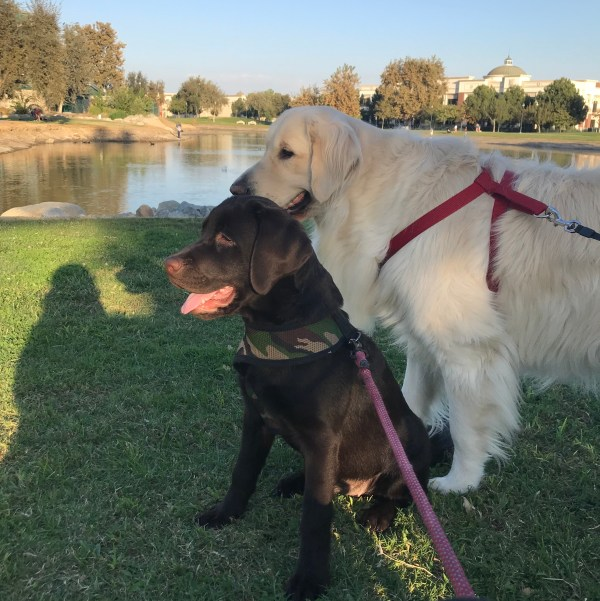 Oct 21 2018 Bessie and Neo at Riverwalk Park