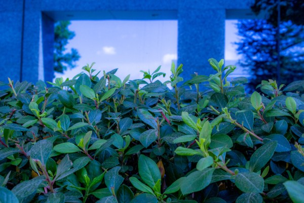 close up of hedge