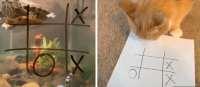 People play Tic Tac Toe with pets.