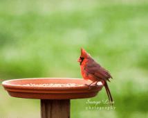 sonyaliraphotography-red2