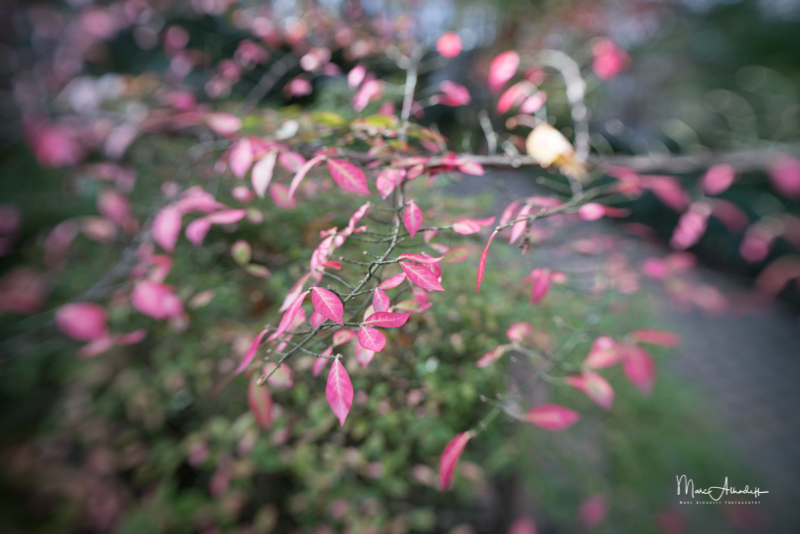 Lensbaby Trio 28 F3.5 - - Sweet-017