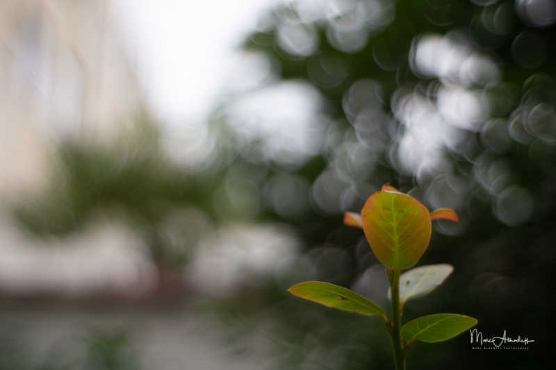 F1.2, Neewer 35mm F1.2- ISO 100-1-1000 s 018