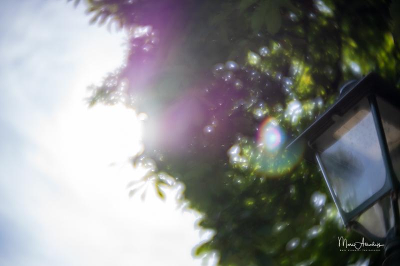 F1.6, Lensbaby Velvet 56mm F1.6- ISO 100-1-2500 s 019