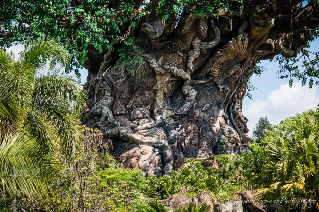 Disney's Animal Kingdom and the Sony Nex-6 @ 55mm, f/4.5, 1/1000sec, ISO 100