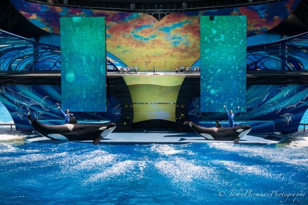 Seaworld - Sony Nex-6 w/ sel55210 lens @ 55mm, f/4.5, 1/100sec, ISO 100