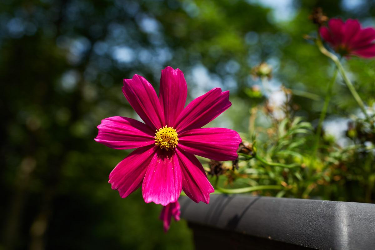 Sony Distagon T* FE 35mm f/1.4 ZA Lens @ F/4