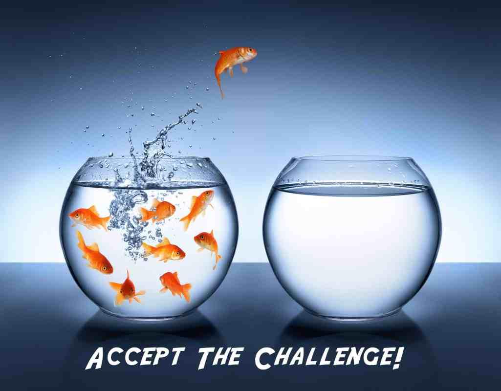 goldfish-jump-v1-lo-2800x2187