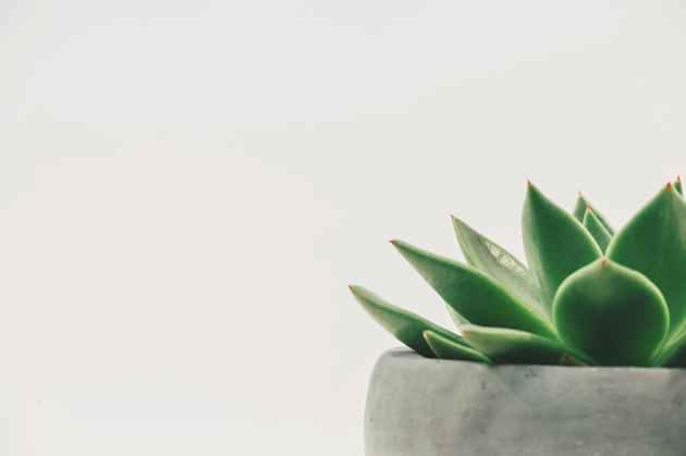 succulent plant on gray plant pot close up photo