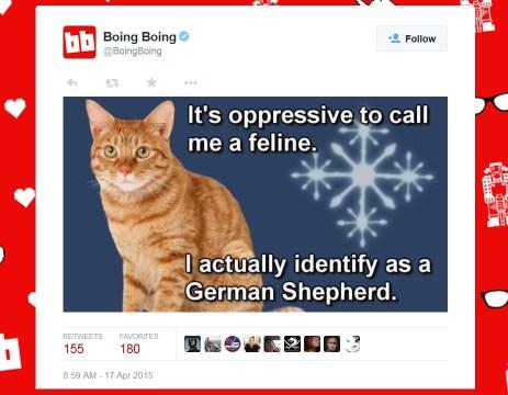 boing boing cat meme-1