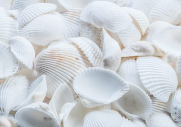 close-up-photography-of-white-shells-1883386