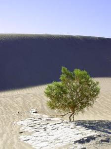 A wee, green oasis in Death Valley, CA [Photo courtesy of PD Photo via Creative Commons]