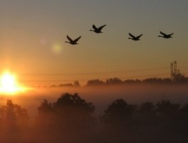 Geese Near Sauk Circle (Detail), photo by Jiri Kvita [Image: FNAL, U.S.D.E.]