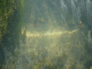 Eddie Van W's Water Reflections (Creative Commons - thanks Eddie!)