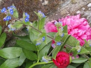 Woburn_England_SPR07_Churchyard_Florals
