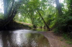 A River Through the Woods. Image courtesy of Public Domain Images.
