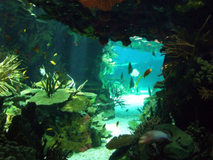 Underwater cave in a tropical coral reef (Photo from 4freephotos)