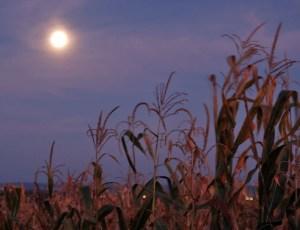 Super Harvest Moon-Rise, photo courtesy of NASA-Science.