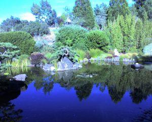Osmosis zen garden, Sebastopol, CA. Photo by Jamie S. Walters (and used as the 'header' for Sophia's Children!).