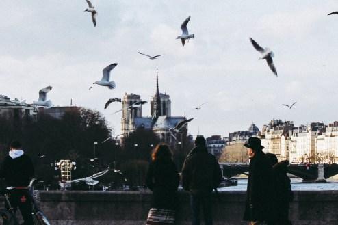 notre-dame-paris-oiseau-admirer
