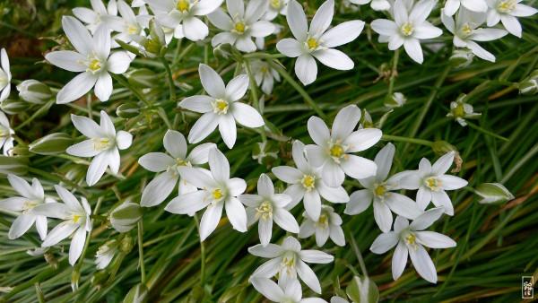 Flowers In Bloom Fleurs Sophies Maze