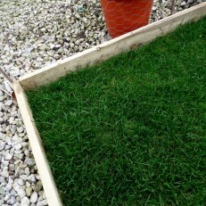 Back lawn edging