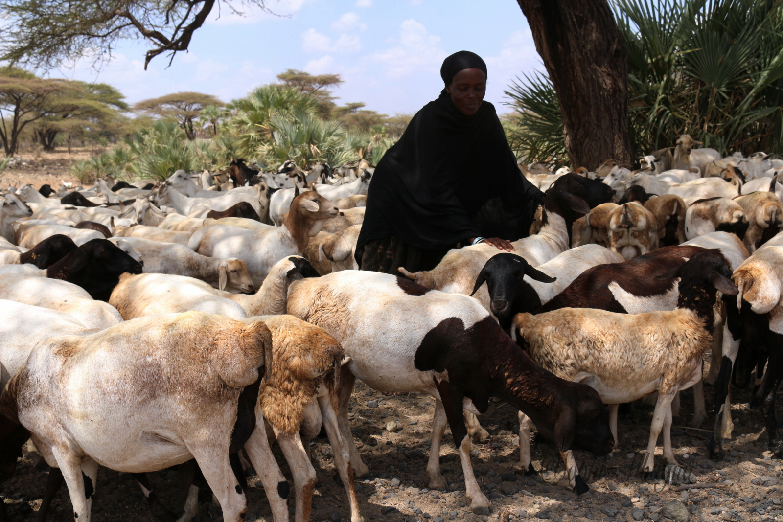 Pastoralism and Women livelihoods