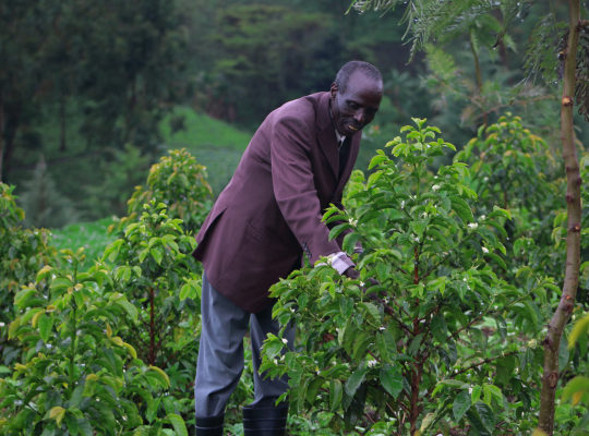 Agroforestry gives Kenyan indigenous community a lifeline