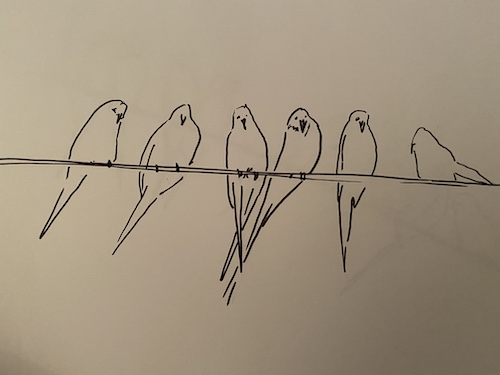 Quick Pen and Ink Sketches of Birds