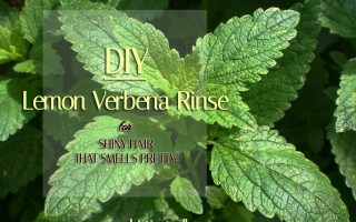 Lemon Verbena Rinse for Shiny Hair that Smells Pretty - Sophisticated Booty