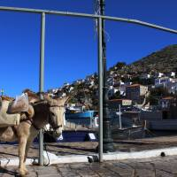 No Cars Allowed on the Island of Hydra