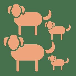 SOVISI-AZIENDA-Riproduttori cani custodi del gregge-01
