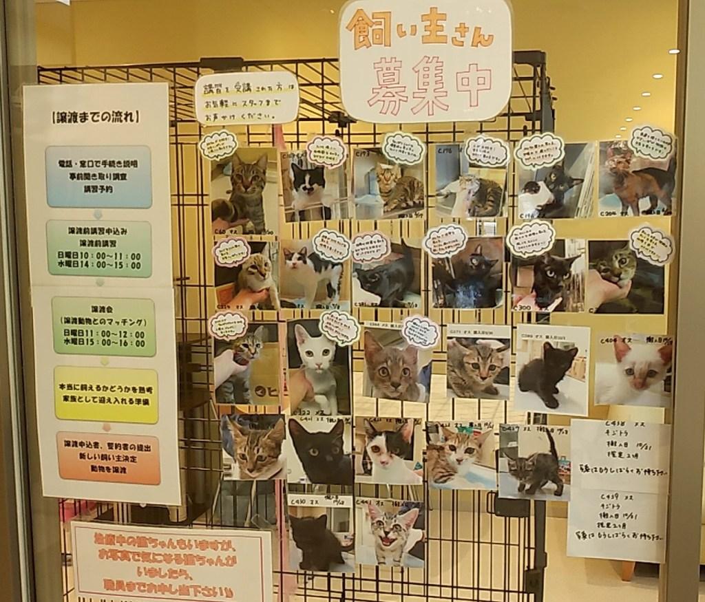 『しっぽの森』猫の飼い主募集