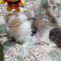 家の中だけで猫は幸せなのか