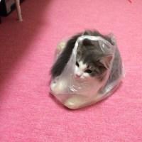 仔猫を家族に迎える方法は?ペットショップ以外の購入方法は?