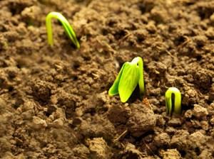 sementinha
