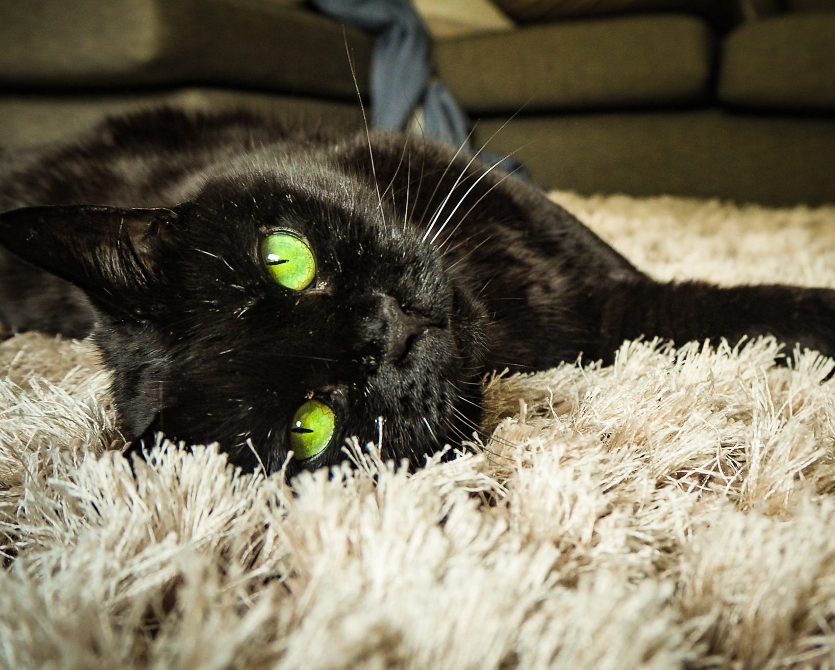 Coco the Black Cat with Green Eyes