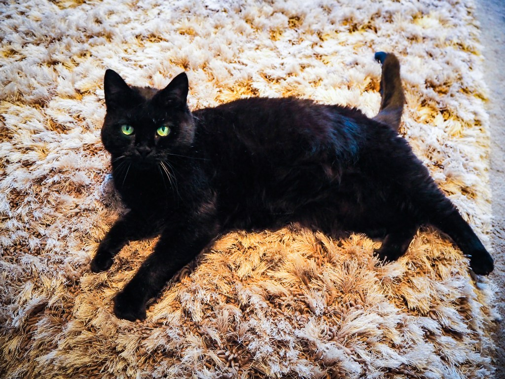 Coco the black cat laying on a grey rug.