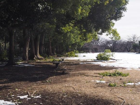 雪で折れた木の枝