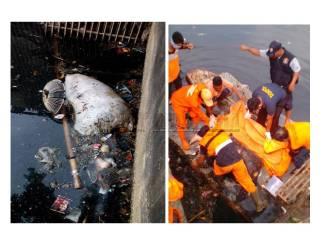 Dikira Karung Sampah, Mayat Membusuk Di Kli Sunter