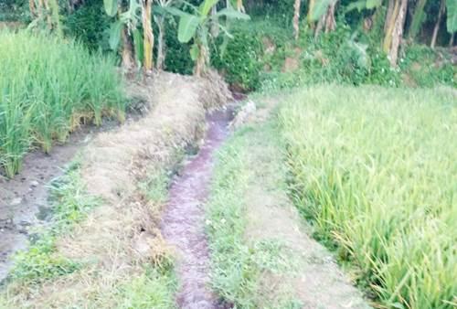 Limbah berwarna merah yang mengalir diantara pesawahan yang dibuang dari perusahaan di kawasan Sunson
