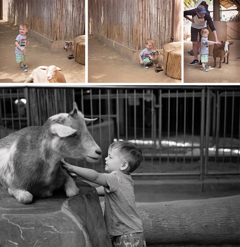 san diego zoo petting paddock